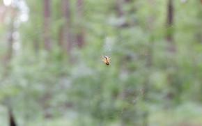 Картинка лес, зеленый, паутина, паук