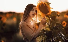 Картинка лето, девушка, подсолнухи, портрет