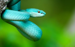 Картинка природа, змея, Коста-Рика