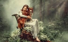 Обои лес, деревья, модель, пень, Девушка, собака, сидит