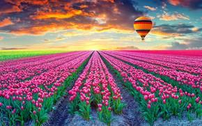 Картинка поле, закат, воздушный шар, тюльпаны