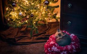 Картинка зима, шарики, свет, комната, праздник, шары, сон, собака, Рождество, спит, Новый год, ткань, лежит, ёлка, …