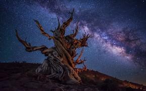 Картинка ночь, коряга, млечный путь, © JAY HUANG