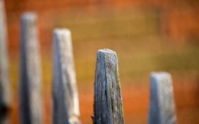 Картинка фон, дерево, забор
