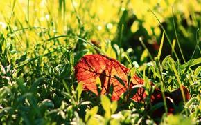Картинка трава, свет, боке, осенний листок