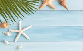 Картинка пляж, лето, звезда, ракушки, summer, beach, starfish, seashells