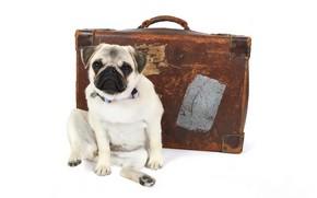 Картинка друг, собака, чемодан