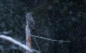 Картинка зима, снег, ветки, природа, темный фон, дерево, сова, птица, пень, столб, ствол, снегопад, неясыть