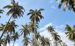Картинка пляж, лето, небо, солнце, пальмы, summer, beach, beautiful, paradise, palms, tropical