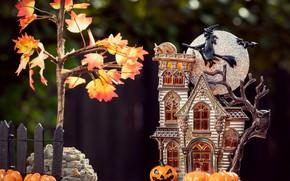Обои осень, листья, макро, полет, дом, темный фон, камни, дерево, праздник, сова, луна, листва, забор, улитка, ...