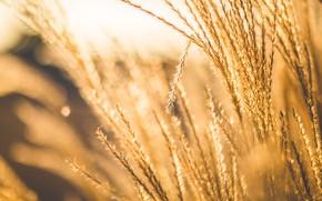 Картинка Растение, Растения, Color, Flora, Plants, Close-up, Blooming, Bloom, Флора, Plant, Negative Space, by Negative Space