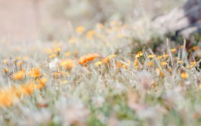 Картинка лето, трава, цветы