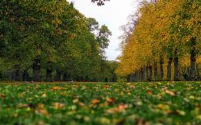 Картинка осень, трава, птицы, Англия, Лондон, голуби, аллея, London, England, Greenwich Park, Гринвичский парк, парк. деревья