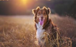 Картинка друг, собака, утро