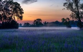 Картинка трава, цветы, туман, весна, утро
