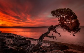 Картинка небо, закат, дерево, берег, вечер, силуэт, водоем, сосна