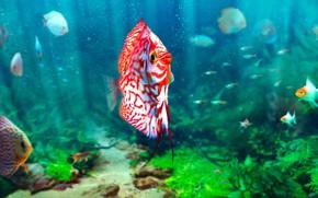 Картинка рыбы, аквариум, Sören Meding, Realistic Aquarium