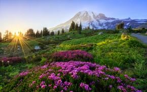 Картинка лес, лето, небо, солнце, лучи, цветы, горы, рассвет, утро, склон, холм, луг, розовые, сиреневые
