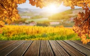 Картинка осень, листья, деревья, мост, парк, forest, nature, yellow, wood, park, autumn, leaves, tree, sunlight