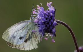 Картинка цветок, бабочка, капли воды