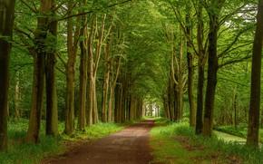 Картинка дорога, лето, деревья