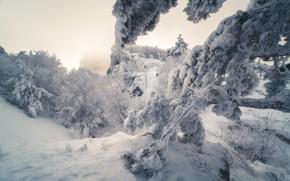 Картинка снег, деревья, Природа, Крым, Ай-Петри