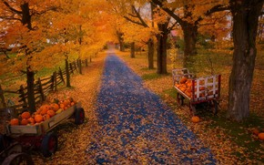 Картинка осень, природа, тыквы