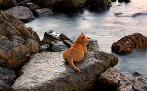 Обои кот, камни, пейзаж, море, чето не купается )), курорт, рыжий, берег, загорает, лежит, кошка