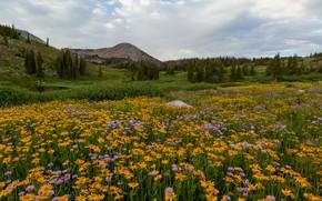Картинка поле, цветы, горы