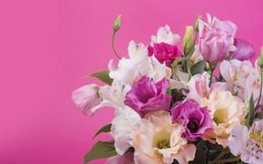 Картинка цветы, фон, розовый, лилии, pink, flowers, lily