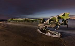 Картинка пляж, небо, тучи, берег, дракон, Франция, череп, пасть, кости, скелет, змей, клыки, скульптура, чудовище, водоем, …