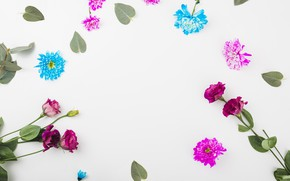 Картинка цветы, белый фон, flowers, background, декор