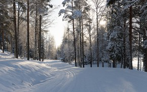 Картинка сугробы, свет, снег, сосновый бор, зима, бор, дорога, зимняя, хвойный, сосны, тени, лыжня, сосна, заснеженный, …