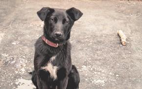 Картинка рабочий стол, собака, деревня, посёлок, животные природа, черная собака, красивая собака