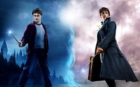 Картинка волшебство, магия, палочки, Гарри Поттер, постер, Дэниэл Рэдклифф, Harry Potter, Daniel Radcliffe, Eddie Redmayne, Эдди ...