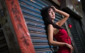Картинка девушка, роза, азиатка
