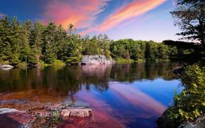 Картинка лес, небо, деревья, закат, озеро