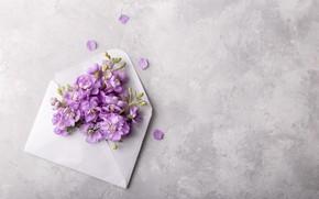 Картинка цветы, flowers, конверт, spring, violet