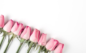 Картинка белый, фон, розы, Pink, розовые, бутоны, roses