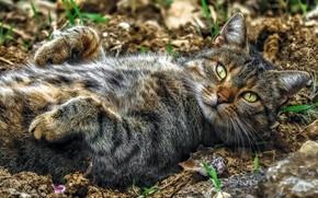 Картинка кот, взгляд, отдых, релакс, лапки, мордочка, расслабон, котэ, котейка