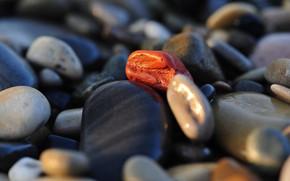Картинка Rocks, Macro, Stones
