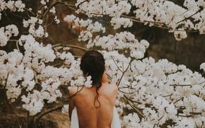 Картинка девушка, весна, цветение