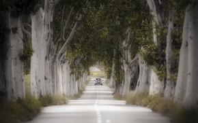 Картинка дорога, машина, деревья