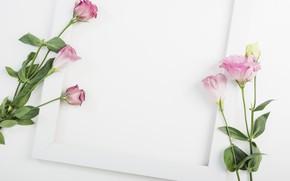 Картинка белый, цветы, фон, рамка, декор, эустома