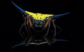Картинка фон, паук, чёрный фон