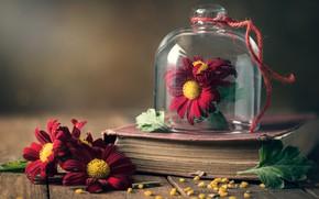 Картинка цветы, фон, книга