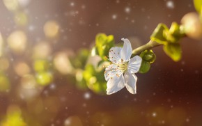 Картинка цветок, весна, лепестки, сад