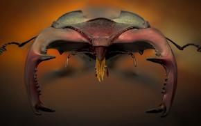 Картинка макро, насекомое, Lucanus cervus
