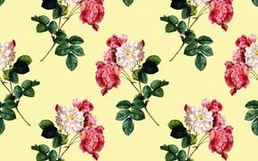 Картинка желтый, фон, розы, лепестки