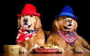 Картинка собаки, две, лапы, языки, миска, черный фон, красная, корм, синяя, на полу, морды, шляпы, лежат, …